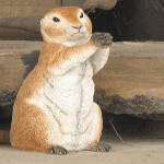 Country Artists Natural World Prairie Dog
