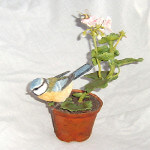 Country Artists Natural World Blue Tit on Pot (Collectors Guild Dawn Chorus Piece)